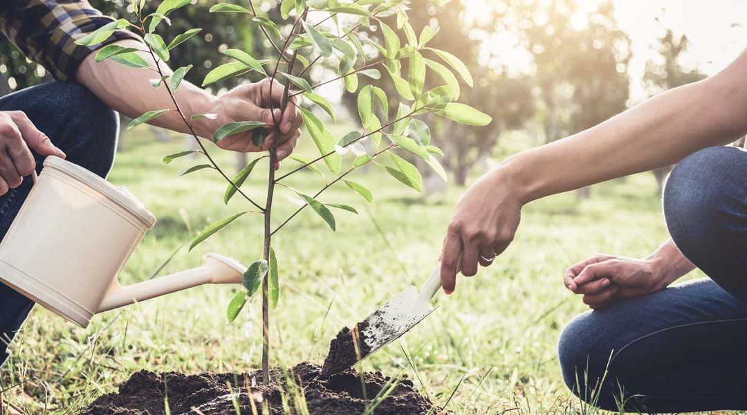 Join RESNET's One Tree Pledge